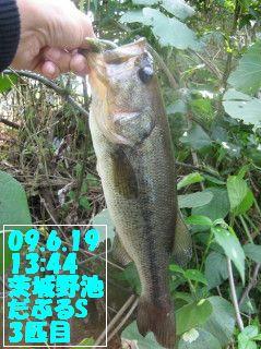 09.6.19単独茨城野池釣行とY川0004.JPG