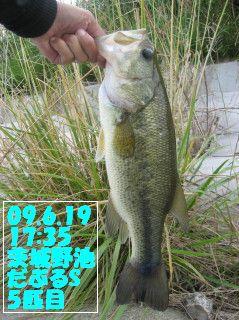 09.6.19単独茨城野池釣行とY川0007.JPG