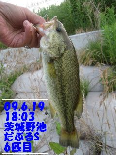 09.6.19単独茨城野池釣行とY川0008.JPG