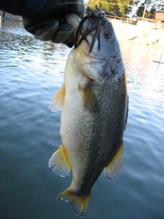 10.1.2初釣り管釣り0001.JPG