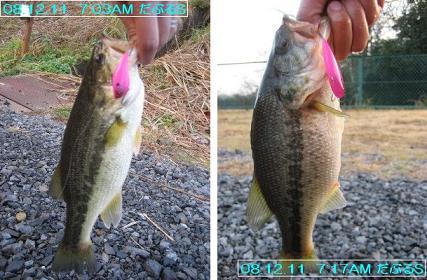 12.7管釣り0001.JPG