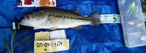 10.5.3茨城野池単独釣行3匹目41.5cm.jpg