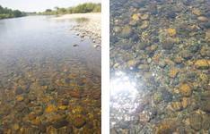 利根川上流2.jpg